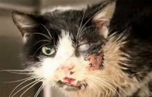 ทาสแมวช็อก! เหมียวโผล่จากหลุม หลังโดนฝังไปแล้ว 5 วัน