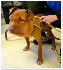 เกือบไม่รอด! สุนัขถูกเชือกรัดคอจนหน้าบวม หายใจแผ่ว