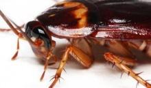 10 เรื่องจริง! ของแมลงสาบที่คุณต้องรู้!