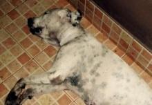 สุดสลด! ตื่นเช้ามาเจอหมาที่รักที่สุดนอนตาย แต่พอได้เจอสิ่งที่อยู่ข้างตัวมัน ก็ทำให้น้ำตาไหล