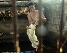 เปิดภาพสลด!!! ชะตากรรมแมวหมา เตรียมถูกฆ่าเซ่นเทศกาลกินหมาที่จีน