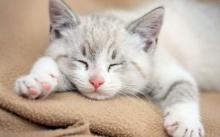 จริงรึ? นักวิทยาศาสตร์เตือนเลี้ยงแมวที่บ้านอาจทำให้ลูกหลานคุณโง่ได้