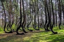 แปลกแต่จริง!! นี่คือ ป่าที่แปลกที่สุดในโลก แปลกแค่ไหนไปดูกัน??