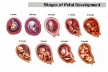 อยากรู้มั๊ย ทารกในครรภ์แต่ละสัปดาห์หนักเท่าไหร่??