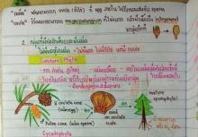 เด็กมัธยมควรอ่าน!...เลคเชอร์ ชีวะ! ย่อสรุป อ่านเข้าใจง่าย สีสันสวยงาม