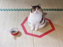 ทำได้ไง!! วงกลมหยุดแมว อยู่นิ่งได้แม้ไม่ต้องพึ่งไสยศาสต