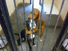 ภาพสะเทือนใจ สุนัขจรจัด 2 ตัวกอดกันก่อนถูกส่งไปโรงฆ่า..สุดท้ายรอดชีวิตทั้งคู่!!