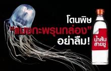 น้ำส้มสายชูกู้ชีพ! แนะนักท่องเที่ยวทะเลอ่าวไทย พกเผื่อฉุกเฉินโดนพิษ′แมงกะพรุนกล่อง