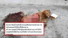 เตือนภัยระวัง!! พวกหากินกับหมาหลอกโอนให้เงินช่วย แต่ความจริงไม่ใช่!?