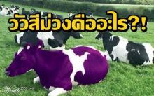 สร้างเส้นทางนายตัวเองแบบวัวสีม่วง (PURPLE COW) คืออะไร?!