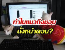 """พาไขปริศนา  """"ทำไมแมวถึงชอบนั่งหน้าคอม ?"""""""