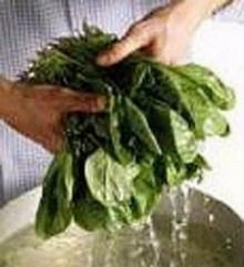 ทานผักโขมลดอาการเสื่อมของจอประสาทตา
