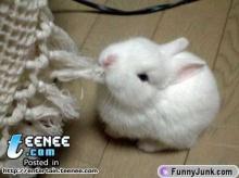 น้องกระต่ายน่ารัก
