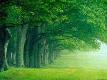คุณคือต้นไม้ชนิดไหน แม่นมากๆ
