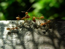 กำจัดมดและแมลงสาบด้วยวิธีง่าย ๆ