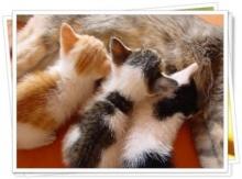 ทำไมถึงมีคำกล่าวว่า แมว 9 ชีวิต