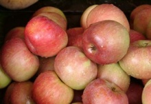 กินเปลือกแอปเปิลไม่ต้องหาหมอ มีสารที่มีคุณ ประโยชน์ 10 ชนิด