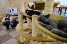เล่นกับแมววันละนิดเพื่อสุขภาพ