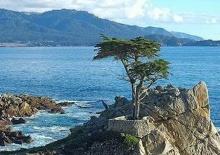 10 ต้นไม้มหัศจรรย์ที่สุดในโลก