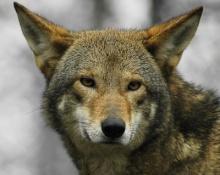 10 อันดับ สัตว์ หายากที่สุดในโลก