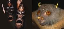 10 สัตว์ที่มีหน้าตาหลุดโลกที่สุด