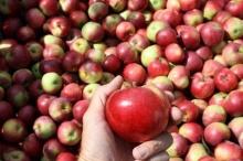 เกร็ดความรู้ วิธีปอกแอปเปิ้ลไม่ให้ดำ