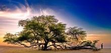 ต้นไม้ ที่เก่าแก่ที่สุดในโลก