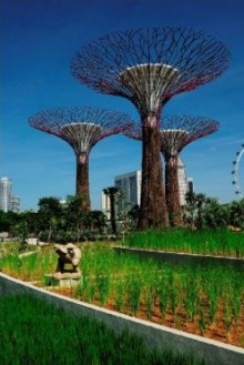 เล็กๆไม่ ใหญ่ๆ สิงคโปร์ ทำ สวนยักษ์แห่งใหม่แดนลอดช่อง ฟินสุดๆ