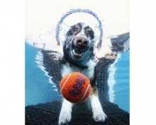 ภาพฮาสุนัขกระโดดคาบบอลใต้น้ำ