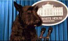 อดีตสุนัขหมายเลข 1 ของสหรัฐตายแล้ว ขณะอายุ 12 ปี