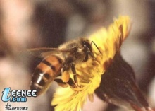 ธรรมะจากผึ้ง