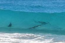 สหรัฐปิดชายหาดหลังฉลามนับพันว่ายใกล้ฝั่ง