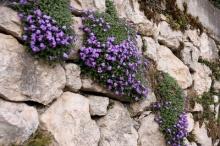 ดอกไม้ในซอกหิน