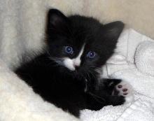 แมวมองเห็นในความมืดหรือไม่ ?