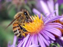 ประโยชน์ของเกสรผึ้ง
