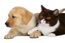 ริโอ ผ่านกม. ห้ามทำศัลยกรรมให้หมา-แมว