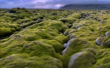 ทุ่งมอสส์หนานุ่มที่Moss covered lava fields