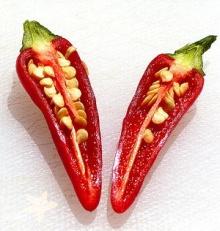 นกกินพริก…ไม่เผ็ด จริงหรือ?!