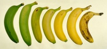 ประโยชน์ดีๆ จากกล้วย 4 วัย