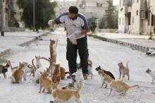 สุดยอด! คนใจบุญให้อาหารแมวกว่าร้อยตัวในเมืองร้าง