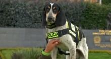 จากสุนัขแก๊งค้ายา กลายเป็นสุนัขตำรวจ!