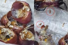 ชาวเน็ตผงะ!! พบ ปลิง ในกระดองปูน้ำจืด ที่ใช้ใส่ส้มตำ!