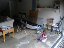 สุนัขแสนกล้า! กระโดดรับกระสุนแทนเด็กน้อย 3 คน