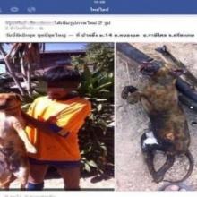 หนุ่มย่างแมวโพสต์รูปอวดลงเฟซบุ๊ก ตำรวจชี้ไม่ผิดกฎหมาย!!!