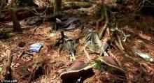 เรื่องราวสุดสยอง!!! ป่าแห่งการฆ่าตัวตาย ในประเทศญี่ปุ่น