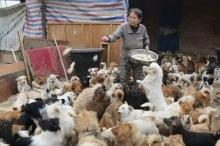 ซึ้งใจ! หญิงจีนตื่นตีสี่ทุกวัน เพื่อให้อาหารสุนัขจรกว่า 1,300 ตัว!