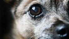 สะเทือนใจ เปิดภาพการควบคุมประชากรสุนัขจรจัด ที่คนรักสัตว์ทนดูไม่ได้!!