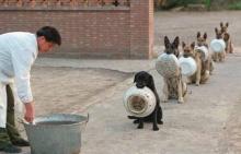 สุดน่ารัก!! คนยังต้องอาย!แพร่ภาพยอดสุนัข เข้าคิวรออาหารอย่างเป็นระเบียบ