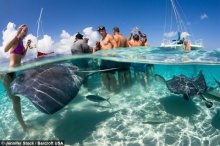 ฟ้าสวยน้ำใส!! เกาะเคย์แมน ทะเลสวยๆพร้อมเหล่ากระเบนแหวกว่ายใกล้ชิด!!