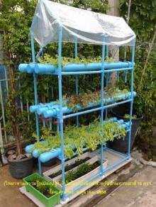 ลองทำกันดูมั้ย!? วิธีทำแปลงปลูกผักไฮโดรฯ สำหรับบ้านทาวเฮ้าส์ 16 ตร.วา